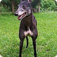 Adopt A Pet :: RF Taffy - Nederland, TX