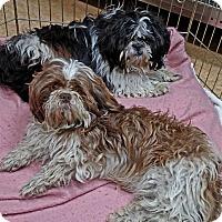 Adopt A Pet :: Gideon - San Jose, CA