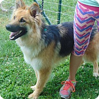 Adopt A Pet :: Elsa - Greeneville, TN