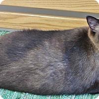Adopt A Pet :: Kemper - Chambersburg, PA