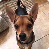 Adopt A Pet :: Monte - Las Vegas, NV