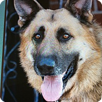 German Shepherd Dog Mix Dog for adoption in Los Angeles, California - CHARLIE VON CORD