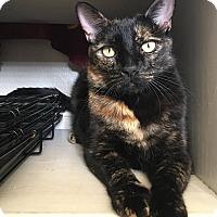 Adopt A Pet :: Glam (a loving chatterbox!) - Santa Ana, CA