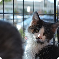 Adopt A Pet :: Noodle - Ogden, UT