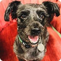 Adopt A Pet :: Marvin - Beloit, WI