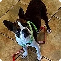Adopt A Pet :: Paisley - Van Vleck, TX