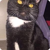 Adopt A Pet :: Nancy - Winston-Salem, NC