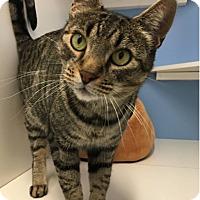Adopt A Pet :: Zeus - Novato, CA