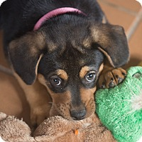 Adopt A Pet :: Truffle - Denver, CO