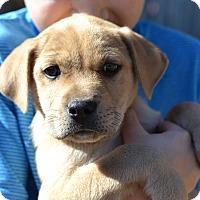 Adopt A Pet :: Pinocchio Marriott - Acworth, GA