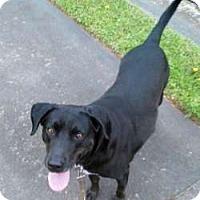 Adopt A Pet :: Bozey - Sudbury, MA