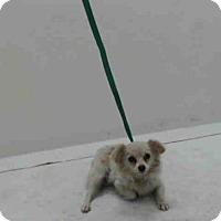 Adopt A Pet :: A367603 - Orlando, FL