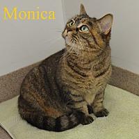 Adopt A Pet :: Monica - Fryeburg, ME