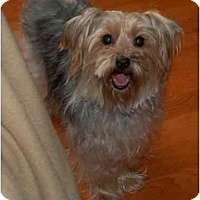 Adopt A Pet :: Doogie - Columbia, SC