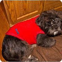 Adopt A Pet :: Sebastian - Chantilly, VA