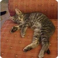 Adopt A Pet :: Colin - Jenkintown, PA