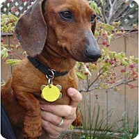 Adopt A Pet :: Lucy Lou - San Jose, CA