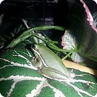 Adopt A Pet :: Bitsy - San Clemente, CA