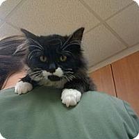 Adopt A Pet :: Pistachio - Richland, MI