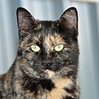 Adopt A Pet :: FORTUNE - Alamogordo, NM