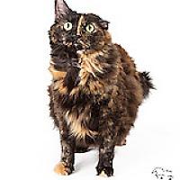 Adopt A Pet :: Gizmo - Tempe, AZ