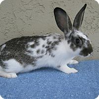Adopt A Pet :: Jorie - Bonita, CA