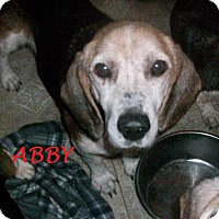Adopt A Pet :: ABBY - Ventnor City, NJ
