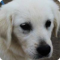 Adopt A Pet :: Junior aka Georgie - Kyle, TX