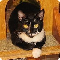 Adopt A Pet :: Bootsie - Harrisburg, NC