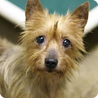 Adopt A Pet :: Mugsley #915 - Arlington Heights, IL