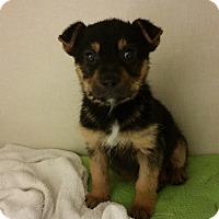 Adopt A Pet :: Duncan - Bedford, TX