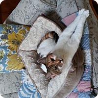 Adopt A Pet :: Gypsy - Arcata, CA