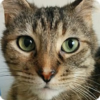 Adopt A Pet :: Willow - Toronto, ON