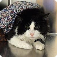 Adopt A Pet :: Howard - Salem, MA