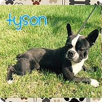 Adopt A Pet :: Tyson - Hazard, KY