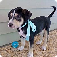 Adopt A Pet :: Gabrielle - Baton Rouge, LA