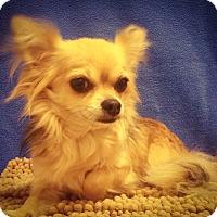 Adopt A Pet :: Otis - Watauga, TX