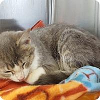 Adopt A Pet :: Rocky ** - La Crescent, MN