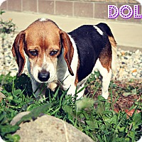 Adopt A Pet :: dolly - Marion, IN