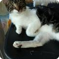 Adopt A Pet :: Andrew - Shelbyville, KY