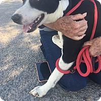 Adopt A Pet :: Maggie - Hopkinton, MA