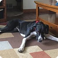 Adopt A Pet :: Pearl Jean - Cedar Rapids, IA