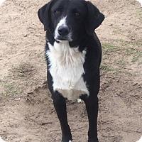 Border Collie Mix Dog for adoption in Slidell, Louisiana - Tyler
