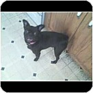 Adopt A Pet :: Augie