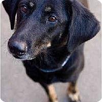 Adopt A Pet :: Cinderella - Portland, OR