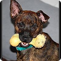 Adopt A Pet :: Kenya (IN NEW ENGLAND) - Brattleboro, VT
