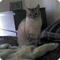 Adopt A Pet :: Kaja - San Jose, CA