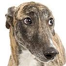 Adopt A Pet :: Heartache