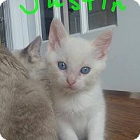 Adopt A Pet :: Justin John - McDonough, GA