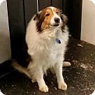Adopt A Pet :: Jazmine